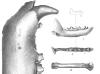 Animal Bones Found